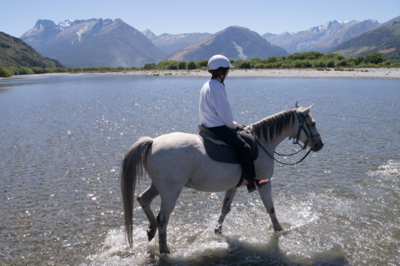 乗馬の保険