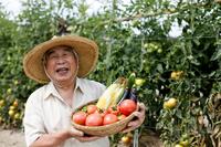 70歳以上の方の傷害保険家庭菜園